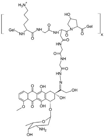 High Molecular Weight Biodegradable Gelatin Doxorubicin Conjugate Diagram
